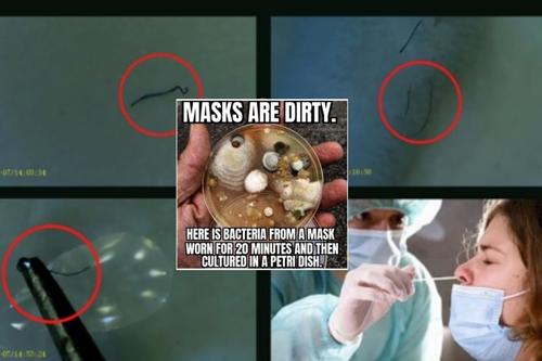 UPOZORNĚNÍ: Určité testry na COVID-19 JSOU KONTAMINOVÁNY NOVÝM ORGANISMEM !!! (Nanoboti a paraziti vlasovci)